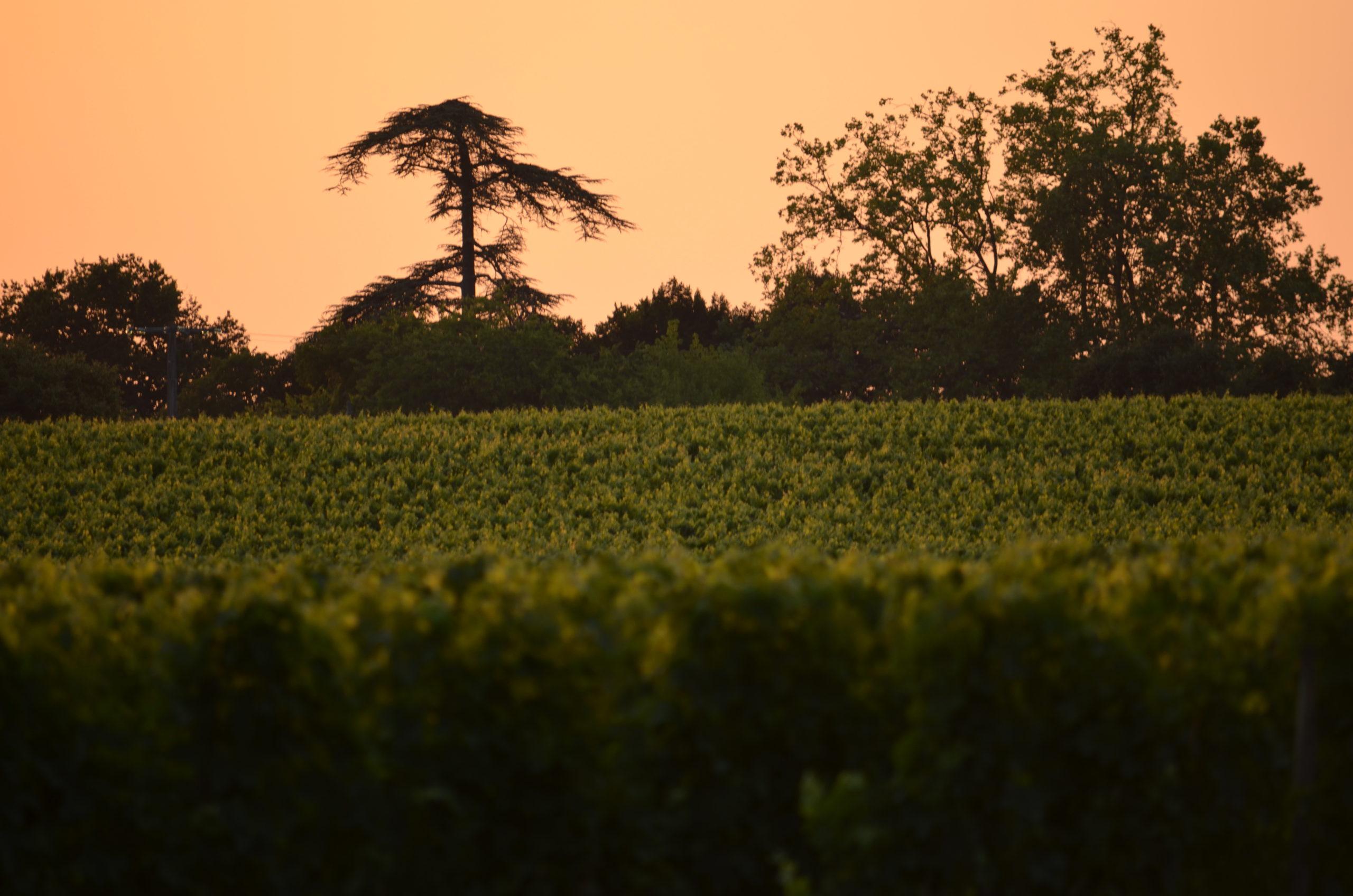 Chateau La Caderie - Vue propriété - Vins bios - Bordeaux